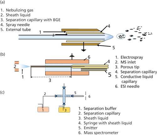 Practical Considerations Of Capillary Electrophoresismass