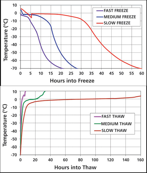 Impact of Manufacturing-Scale Freeze-Thaw Conditions on a