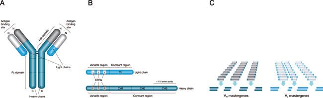 Mab Generation Techniques Foster R Amp D Advances Biopharm